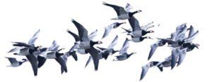 Är det en riktig fågel! Lever den? – Pedagogisk ringmärkning i Stockholm 1