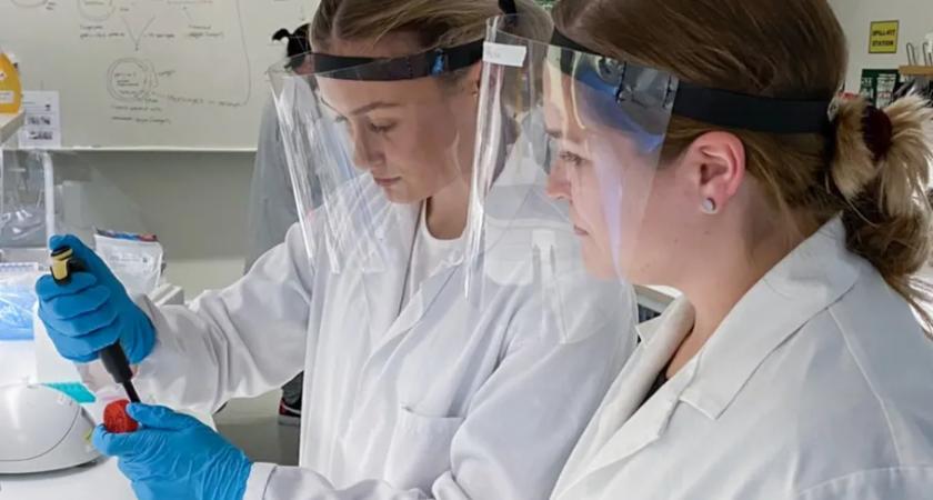 Gula bananflugor kopplar Högskolan till årets nobelpris i kemi