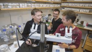 Avslöjar histonmodifierande enzymers hemliga liv